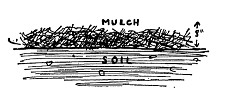 Start with at least eight inches of mulch